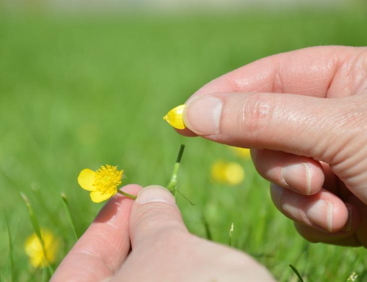Nienke plukt bloemblaadjes